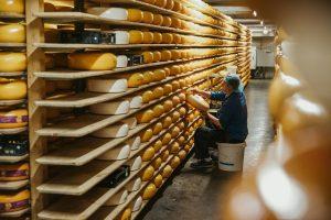 jersey koe kaas opgestapeld in enorme schappen