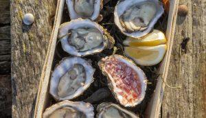 hoe open je oesters