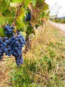 Hotspots Valencia druiven